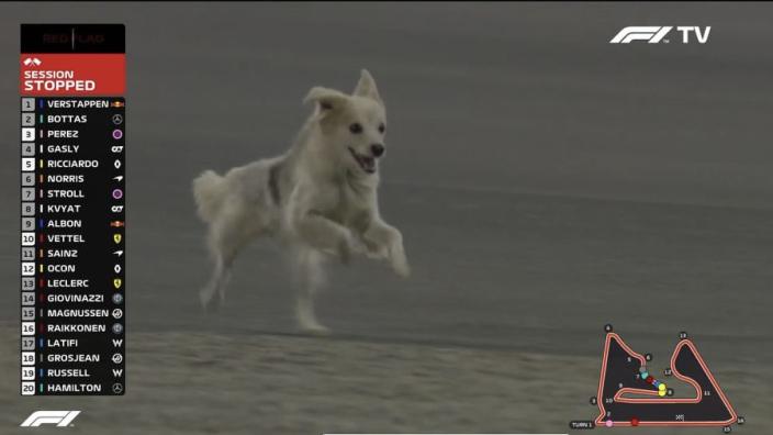 Wilde hond veroorzaakt rode vlag, Hamilton vreest voor Roscoe